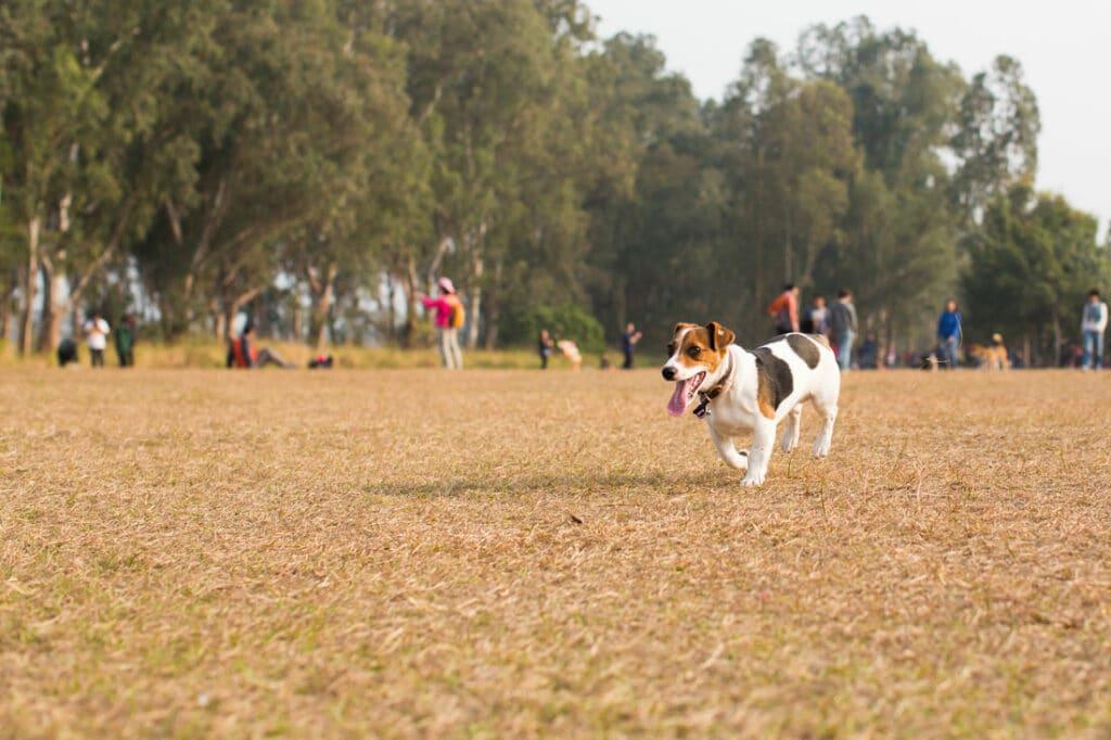 dog park san diego