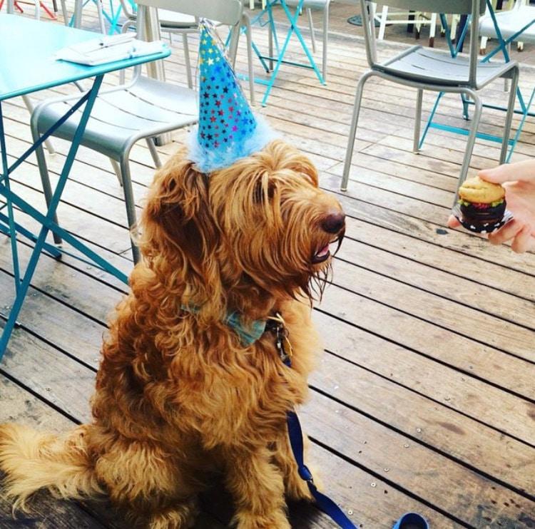 Photo courtesy of Three Dog Bakery Del Mar