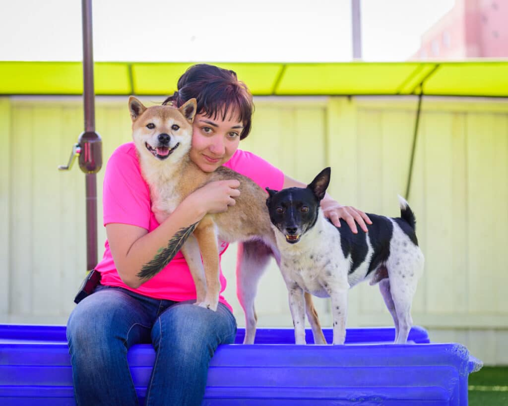 Best Long-term Dog Boarding Rates Throughout San Diego