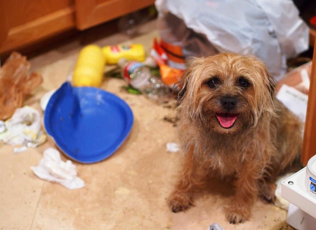 Smiling Dog Garbage