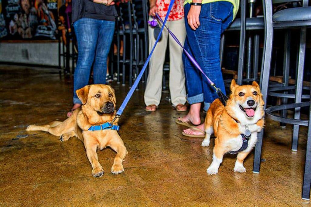 gilbert dog friendly restaurants