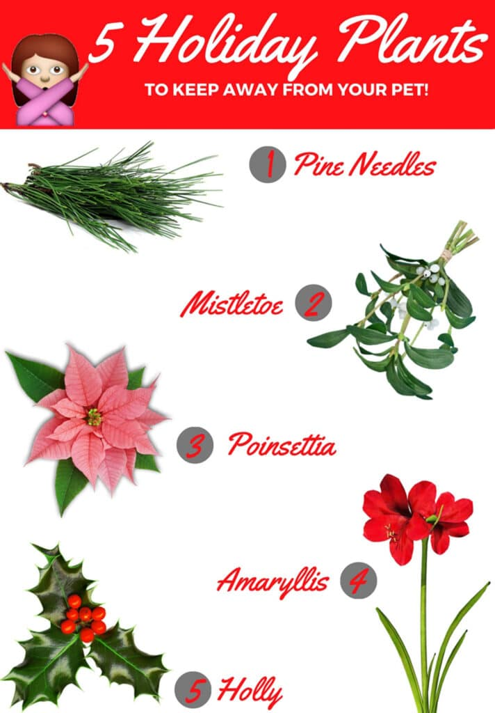 5 Holiday Plants to Keep Away From Your Pet