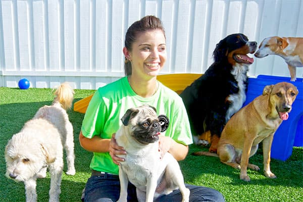 Paw commons pet resort in encinitas ca smiling staff member playing with a bunch of dogs outdoors solutioingenieria Images