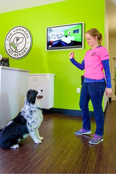 Trainer working with a dog with treats