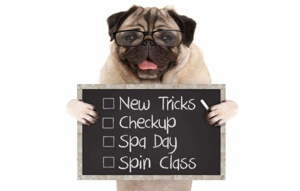 dog with new years resolution list