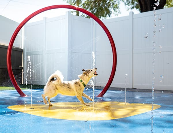 dog playing in the splash pad at the Scottsdale location